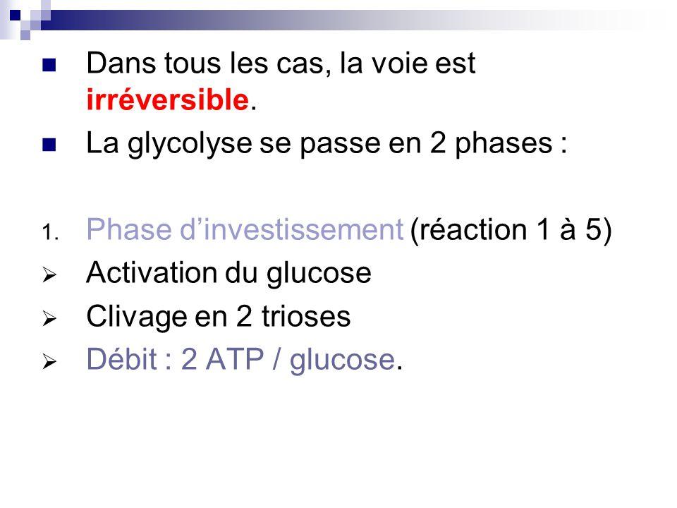 Dans tous les cas, la voie est irréversible.La glycolyse se passe en 2 phases : 1.