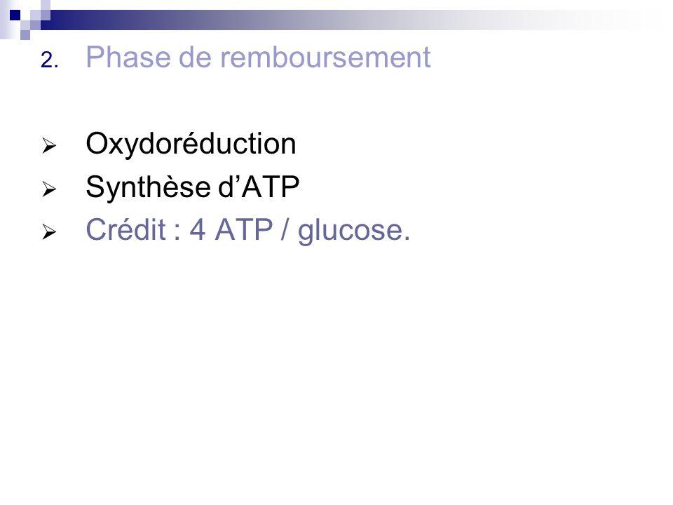 2. Phase de remboursement Oxydoréduction Synthèse dATP Crédit : 4 ATP / glucose.