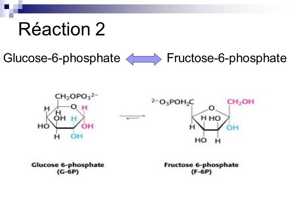Réaction 2 Glucose-6-phosphateFructose-6-phosphate