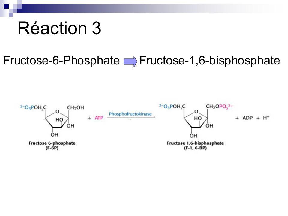 Réaction 3 Fructose-6-PhosphateFructose-1,6-bisphosphate