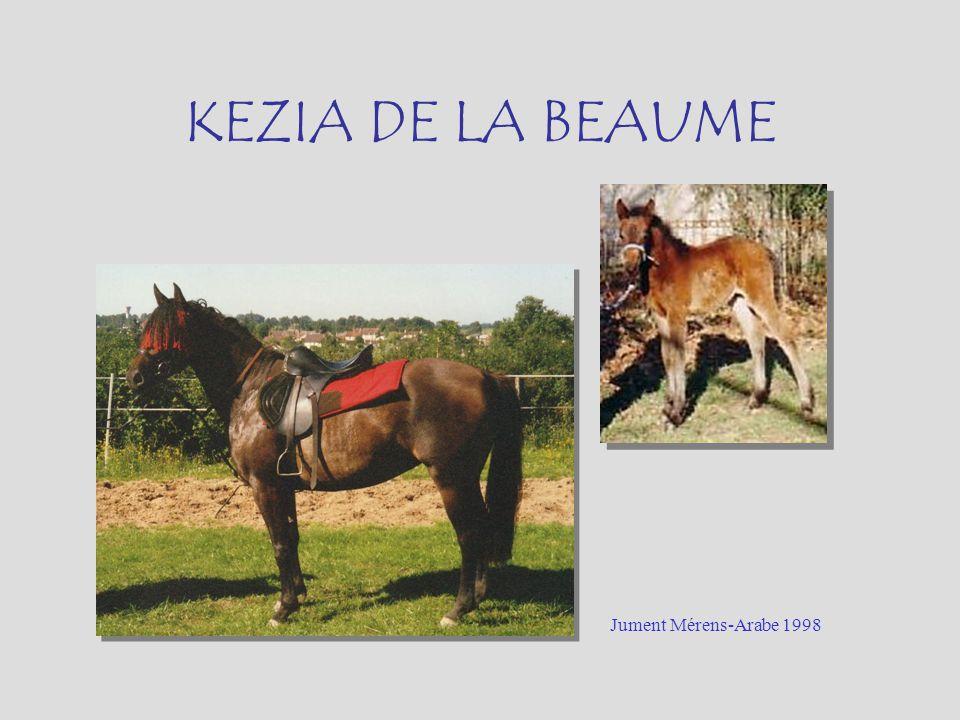 KEZIA DE LA BEAUME Jument Mérens-Arabe 1998