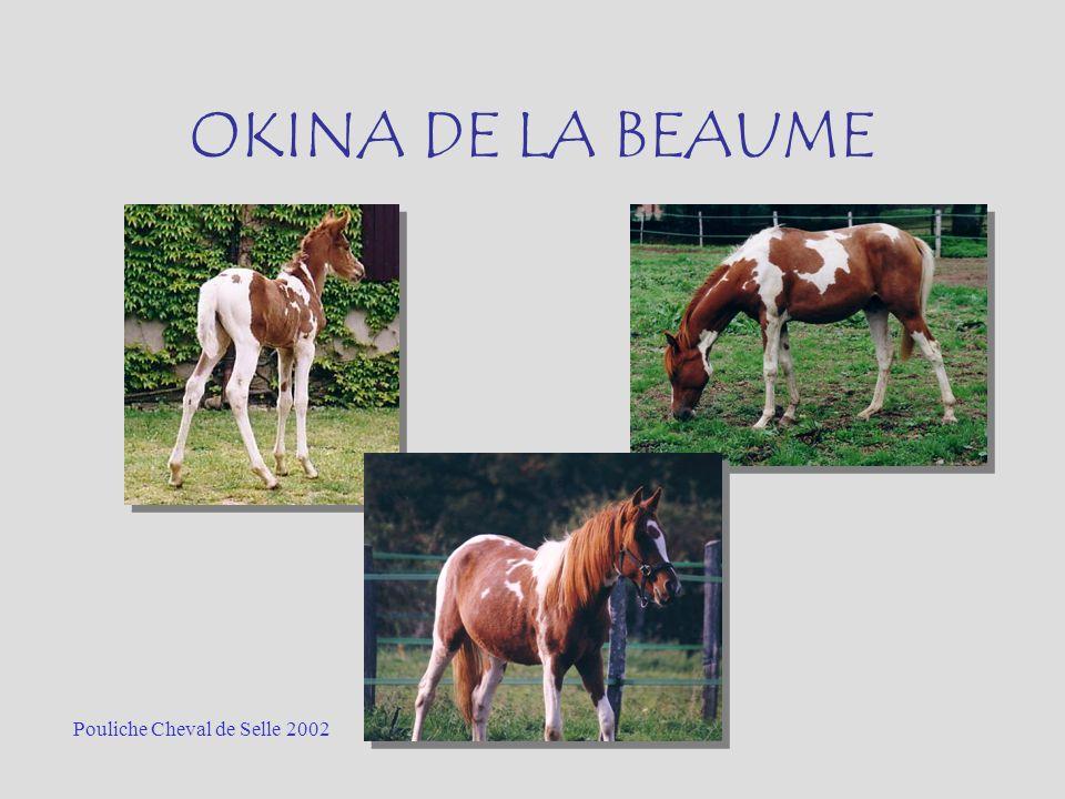 OKINA DE LA BEAUME Pouliche Cheval de Selle 2002