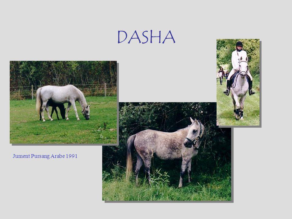 DASHA Jument Pursang Arabe 1991