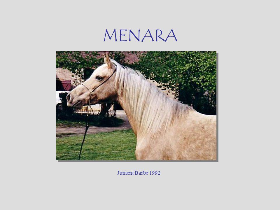 MENARA Jument Barbe 1992