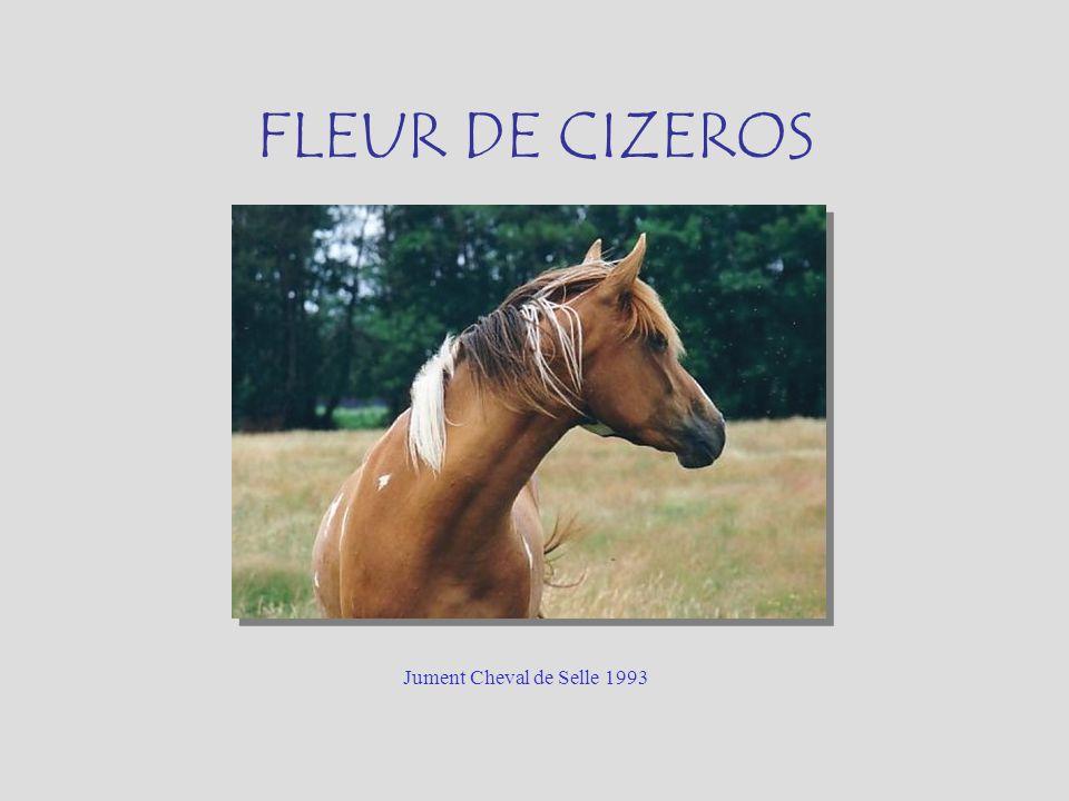 FLEUR DE CIZEROS Jument Cheval de Selle 1993
