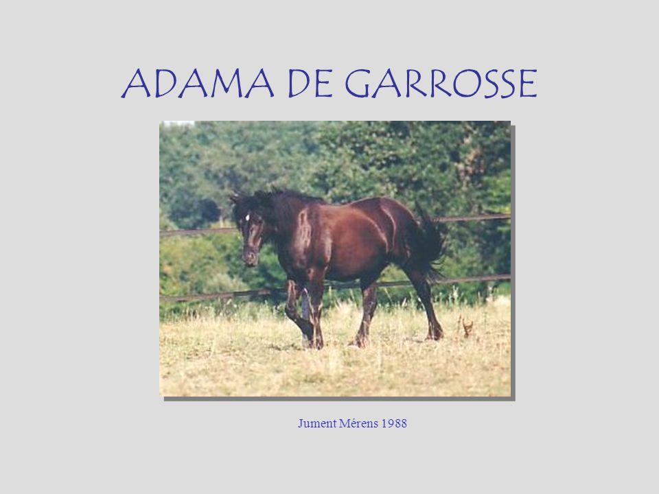 ADAMA DE GARROSSE Jument Mérens 1988