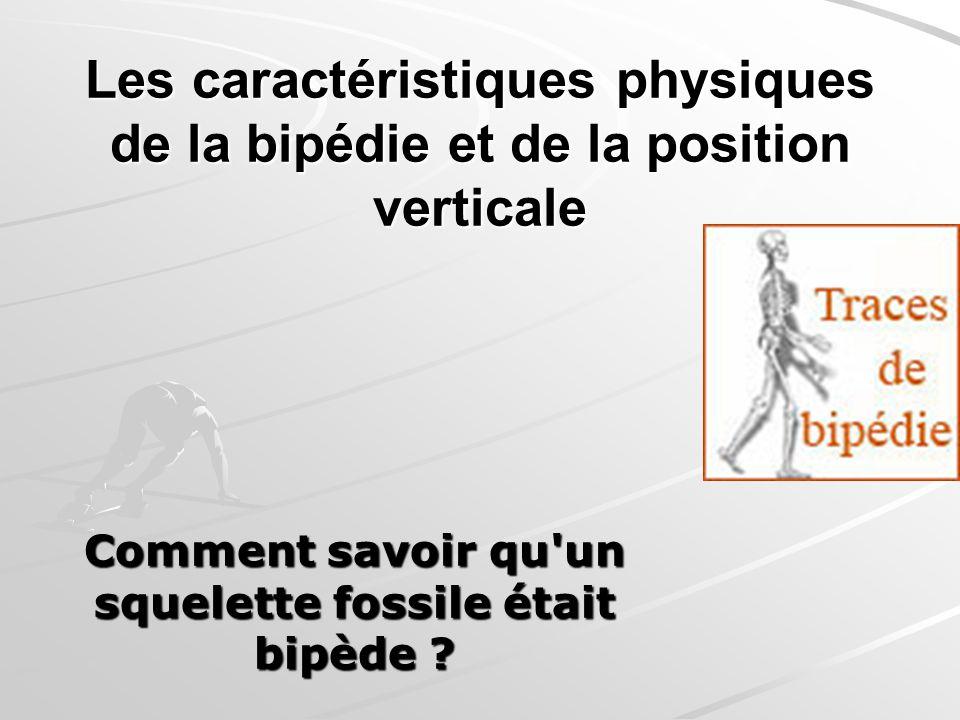 Les caractéristiques physiques de la bipédie et de la position verticale Comment savoir qu'un squelette fossile était bipède ?