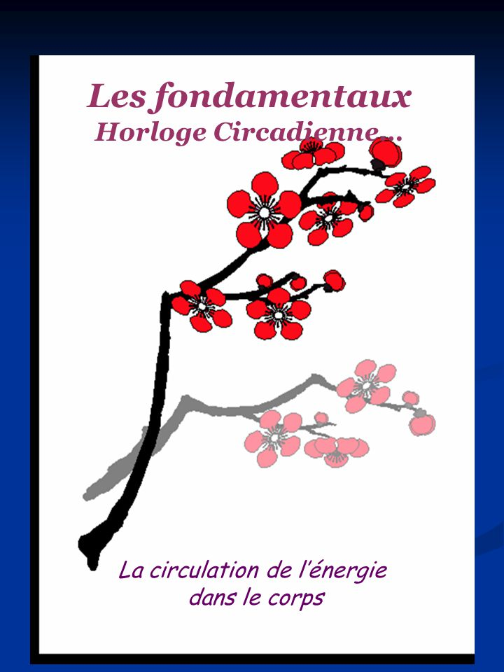 Les fondamentaux Horloge Circadienne… La circulation de lénergie dans le corps