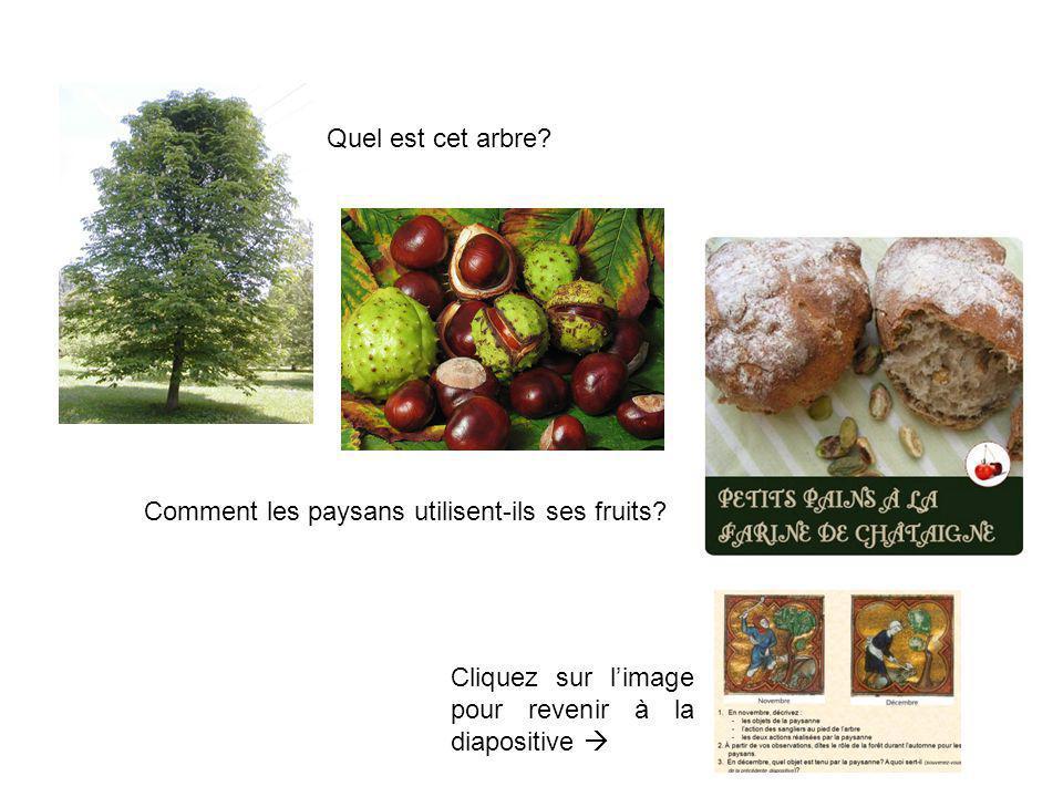 Quel est cet arbre? Comment les paysans utilisent-ils ses fruits? Cliquez sur limage pour revenir à la diapositive