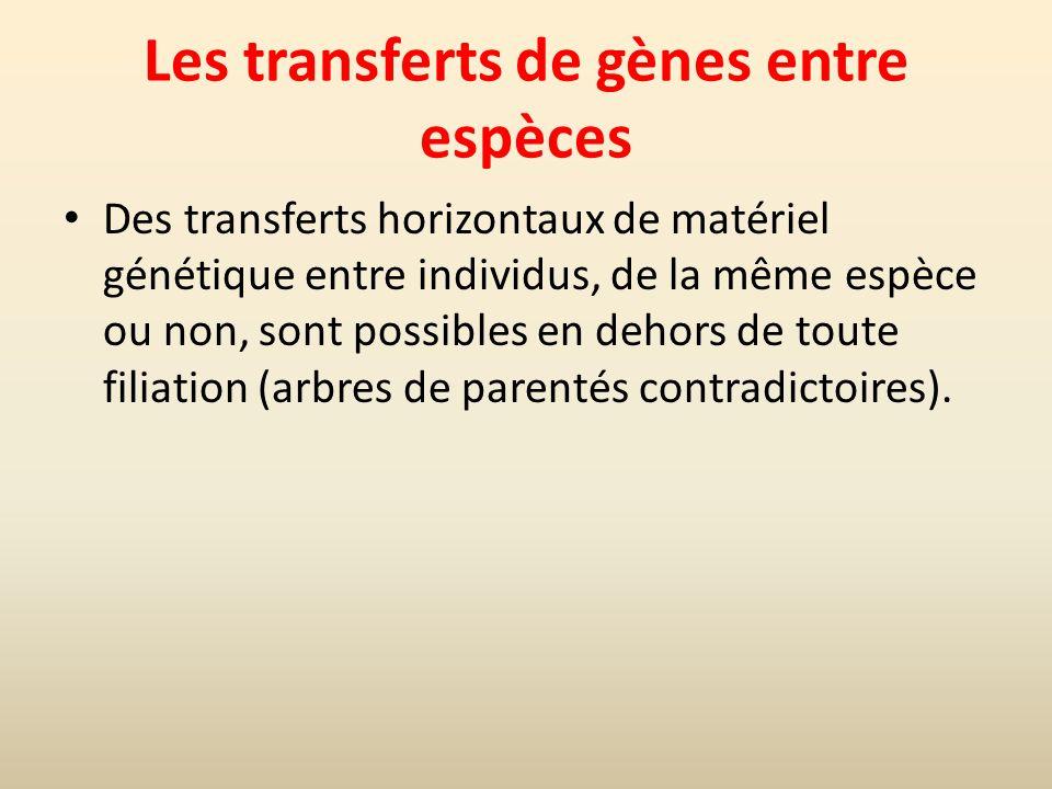 Les transferts de gènes entre espèces Des transferts horizontaux de matériel génétique entre individus, de la même espèce ou non, sont possibles en dehors de toute filiation (arbres de parentés contradictoires).