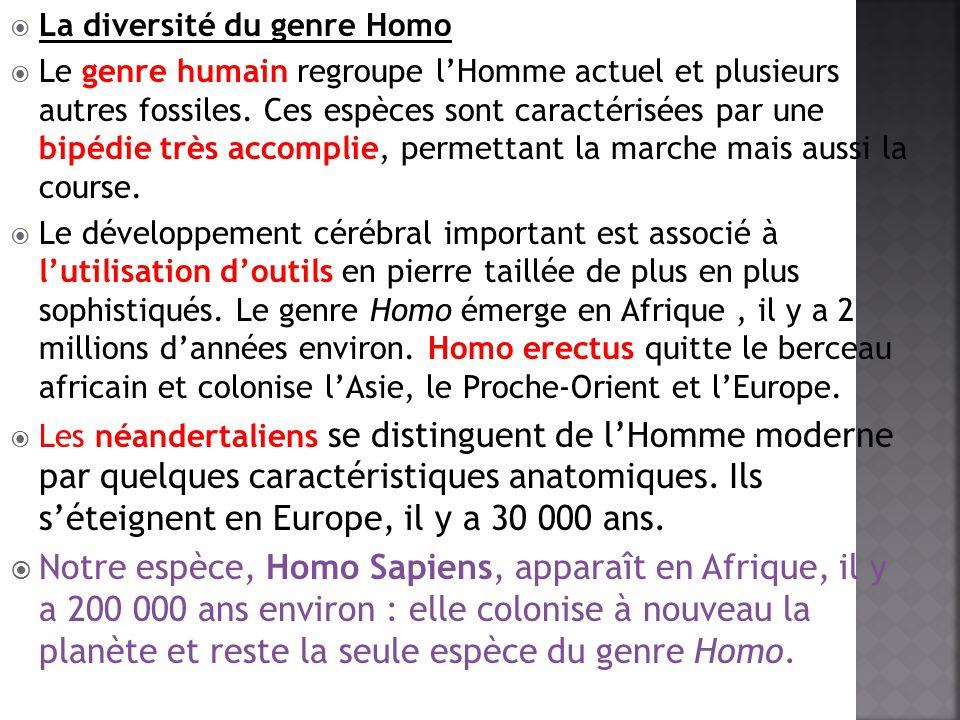 La diversité du genre Homo Le genre humain regroupe lHomme actuel et plusieurs autres fossiles. Ces espèces sont caractérisées par une bipédie très ac