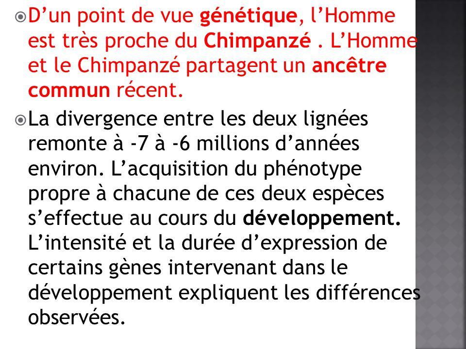 Dun point de vue génétique, lHomme est très proche du Chimpanzé. LHomme et le Chimpanzé partagent un ancêtre commun récent. La divergence entre les de