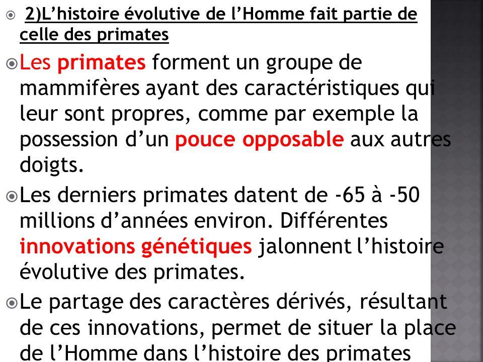 2)Lhistoire évolutive de lHomme fait partie de celle des primates Les primates forment un groupe de mammifères ayant des caractéristiques qui leur son
