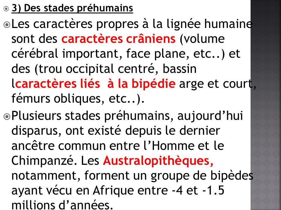 3) Des stades préhumains Les caractères propres à la lignée humaine sont des caractères crâniens (volume cérébral important, face plane, etc..) et des