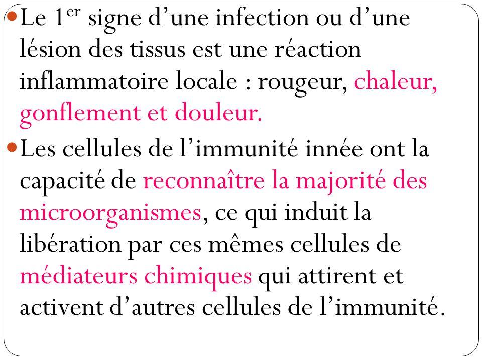 Bilan à noter : Tous les animaux pluricellulaires possèdent une immunité innée (génétiquement héritée), peu spécifique, mais qui assure une intervention rapide face à une intervention rapide face à une agression par des microorganismes.
