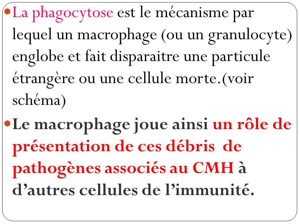 2) Lélimination des pathogènes Etude du doc.1 p.282 La phagocytose (biologieenflash)biologieenflash Schéma à partir du transparent.