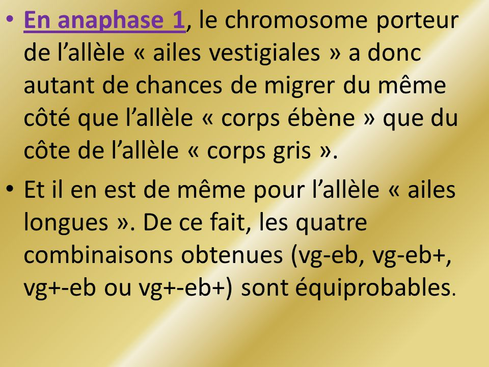En anaphase 1, le chromosome porteur de lallèle « ailes vestigiales » a donc autant de chances de migrer du même côté que lallèle « corps ébène » que