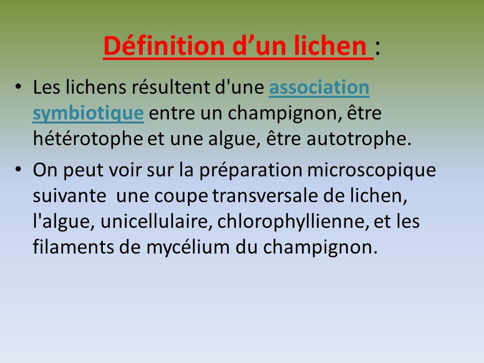 Correction du TP : un exemple de symbiose Les lichens