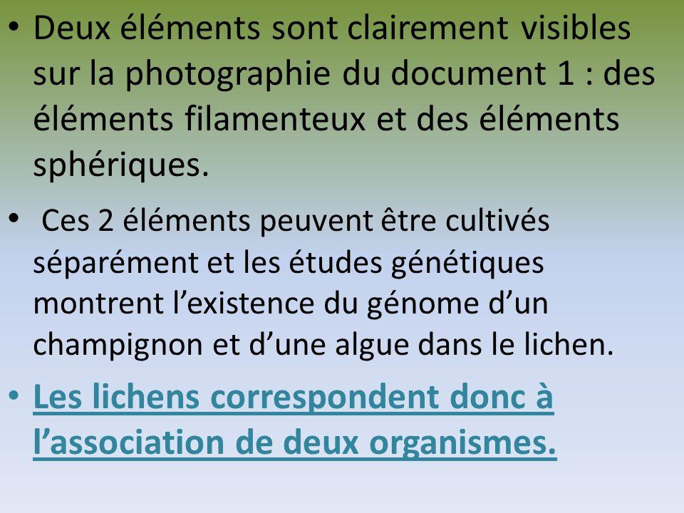 algue Champignon (mycélium)