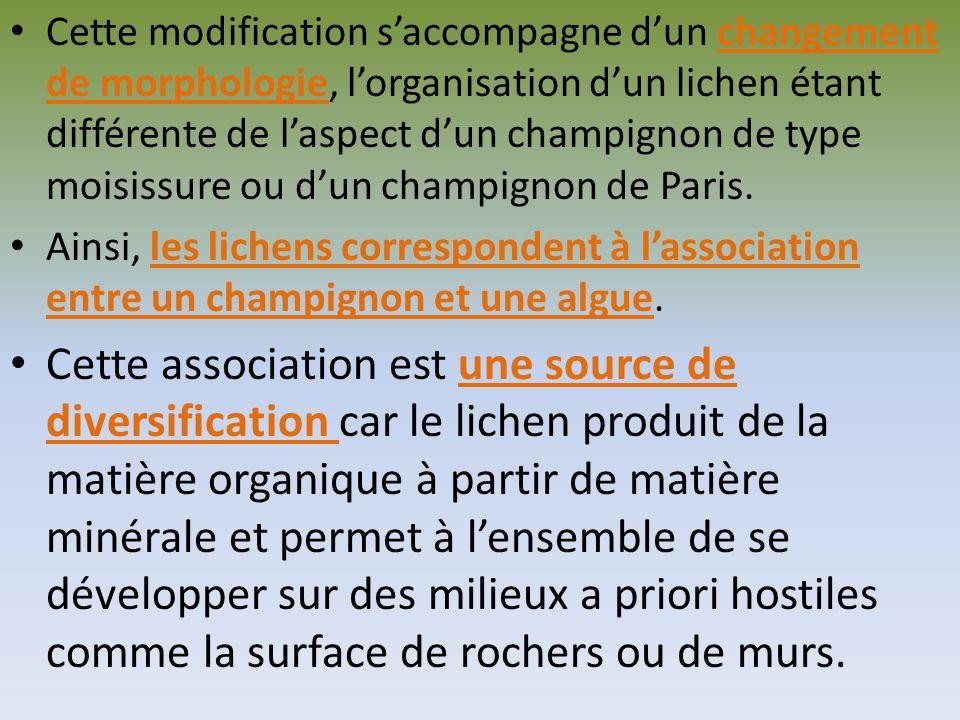 Dans le doc.2 du livre p.49, le CO2 fixé sous forme de matière organique apparaît dabord dans la couche contenant les algues, puis plus tard et dans une plus faible proportion dans la couche contenant les filaments du champignon (appelés filaments mycéliens).