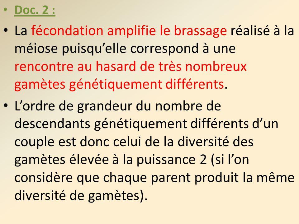 Doc. 2 : La fécondation amplifie le brassage réalisé à la méiose puisquelle correspond à une rencontre au hasard de très nombreux gamètes génétiquemen