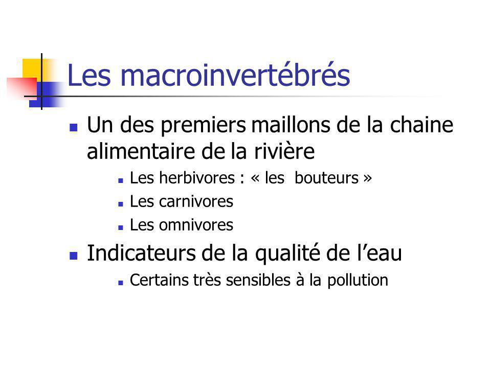 Les macroinvertébrés Un des premiers maillons de la chaine alimentaire de la rivière Les herbivores : « les bouteurs » Les carnivores Les omnivores In
