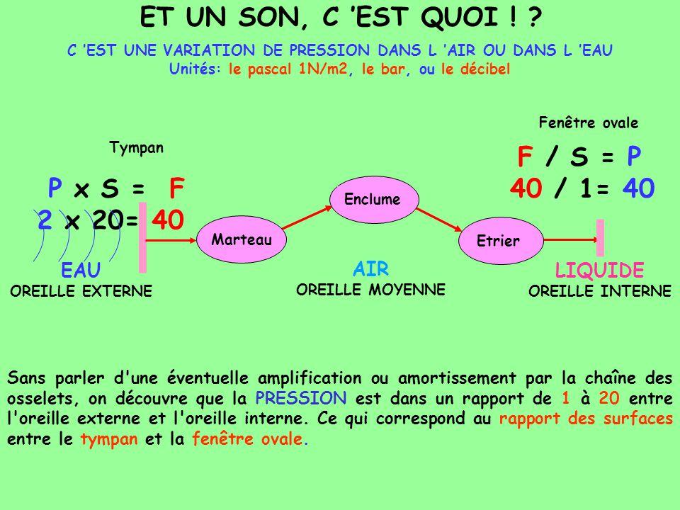 P x S = F 2 x 20= 40 EAU OREILLE EXTERNE LIQUIDE OREILLE INTERNE ET UN SON, C EST QUOI ! ? Sans parler d'une éventuelle amplification ou amortissement