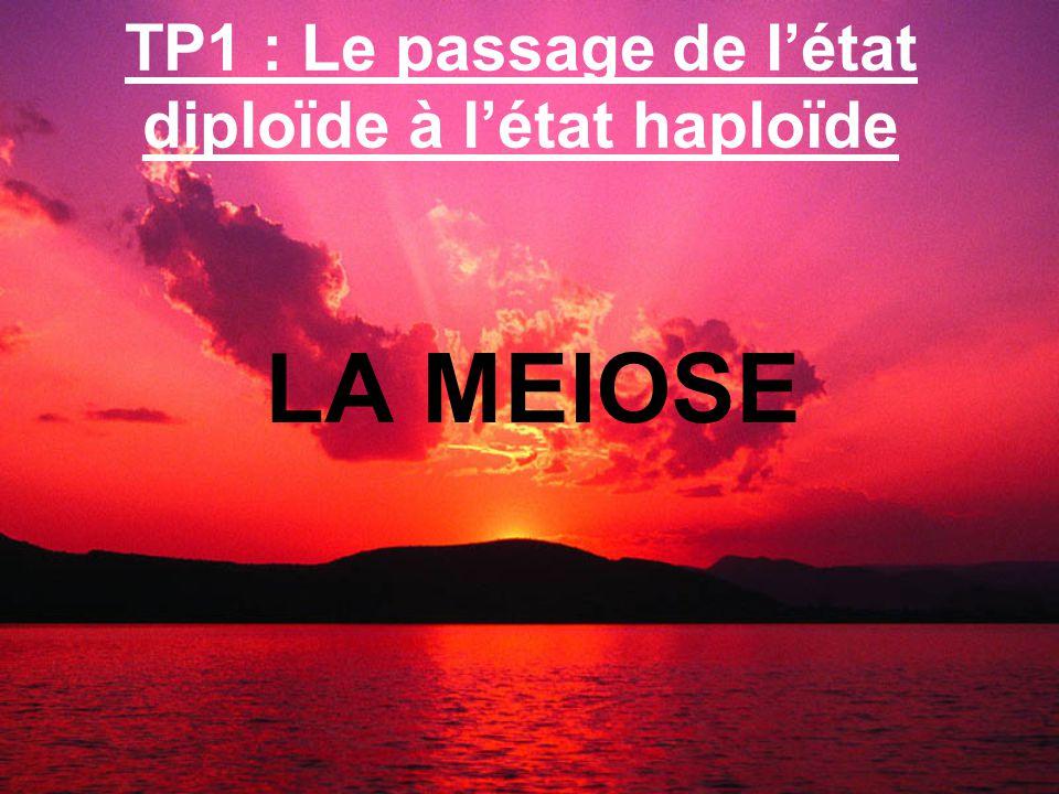 TP1 : Le passage de létat diploïde à létat haploïde LA MEIOSE