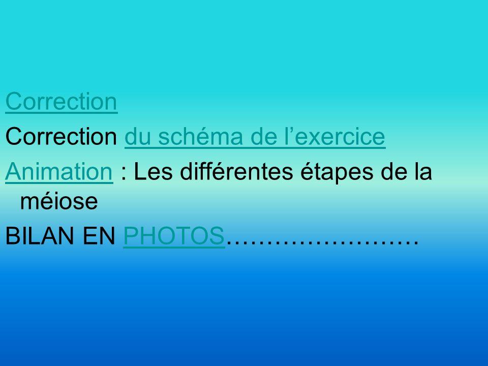 Correction Correction du schéma de lexercicedu schéma de lexercice AnimationAnimation : Les différentes étapes de la méiose BILAN EN PHOTOS……………………PHOTOS