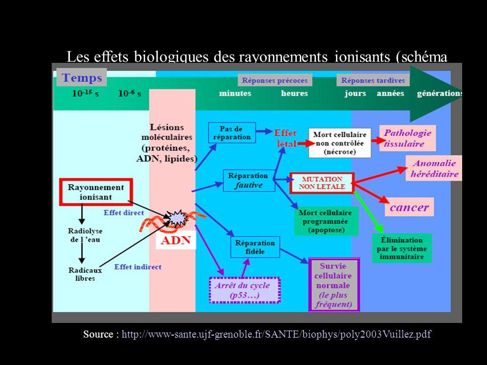 Les effets biologiques des rayonnements ionisants (schéma récapitulatif) Source : http://www-sante.ujf-grenoble.fr/SANTE/biophys/poly2003Vuillez.pdf