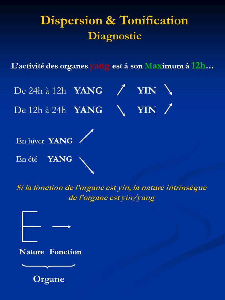 Lactivité des organes yang est à son M ax imum à 12h … De 24h à 12h YANG YIN De 12h à 24h YANG YIN Dispersion & Tonification Diagnostic En été YANG En