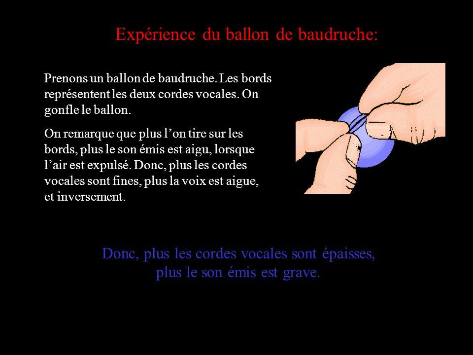 Expérience du ballon de baudruche: Prenons un ballon de baudruche. Les bords représentent les deux cordes vocales. On gonfle le ballon. On remarque qu