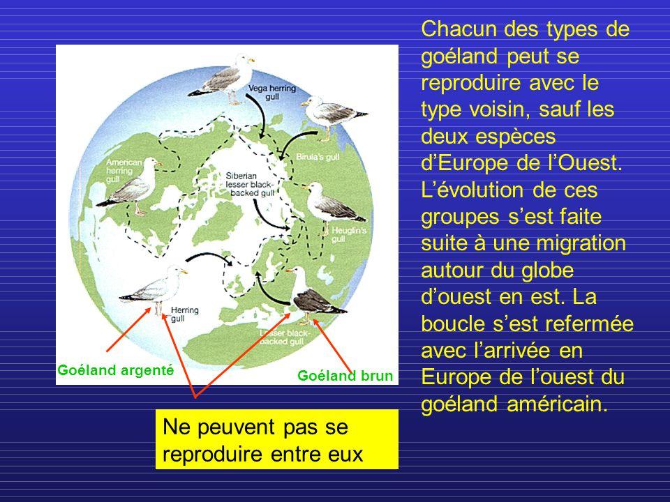 Ne peuvent pas se reproduire entre eux Chacun des types de goéland peut se reproduire avec le type voisin, sauf les deux espèces dEurope de lOuest. Lé