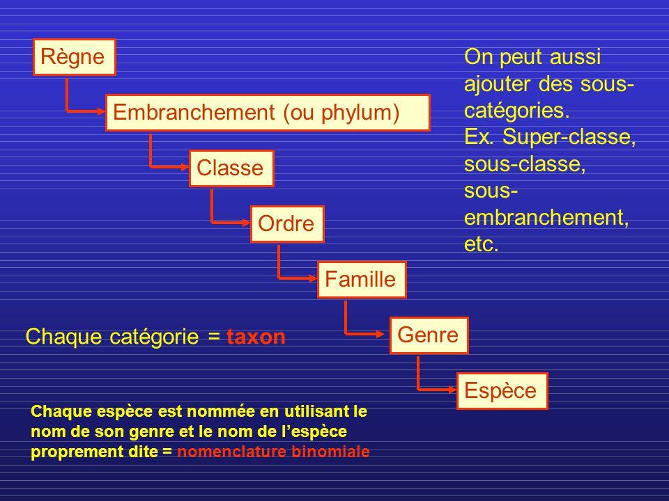 Règne Embranchement (ou phylum)ClasseOrdreFamilleGenreEspèce Chaque catégorie = taxon On peut aussi ajouter des sous- catégories. Ex. Super-classe, so