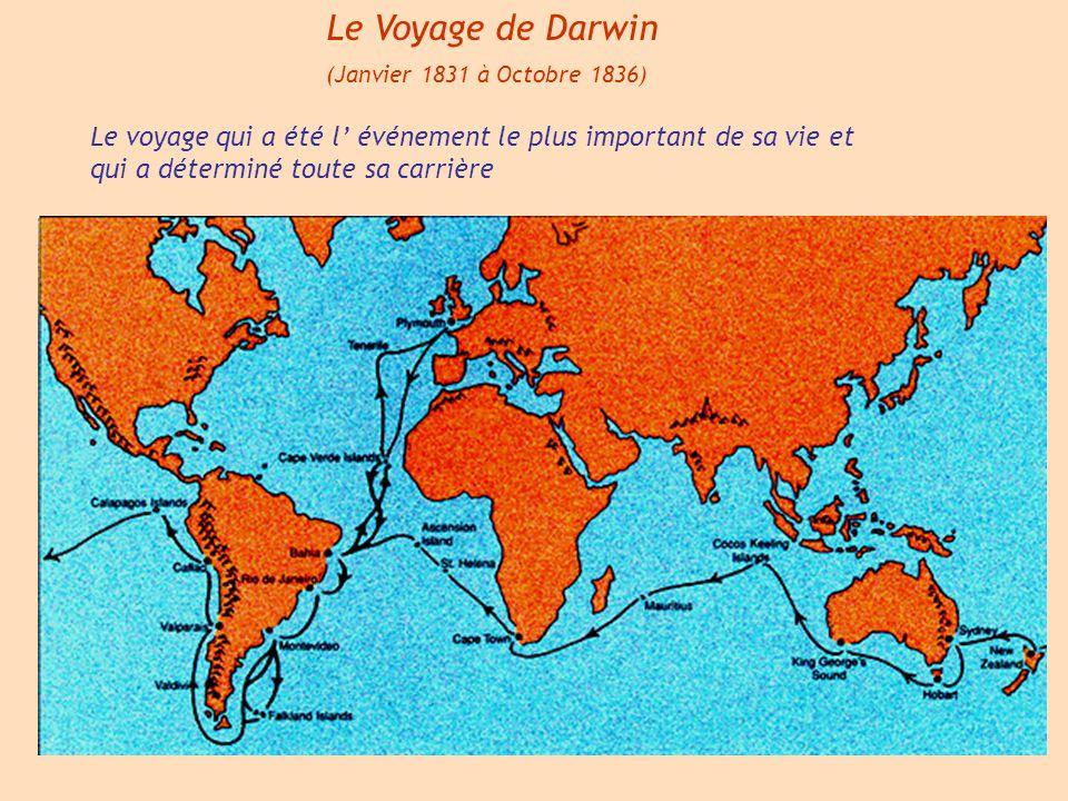 Le Voyage de Darwin (Janvier 1831 à Octobre 1836) Le voyage qui a été l événement le plus important de sa vie et qui a déterminé toute sa carrière