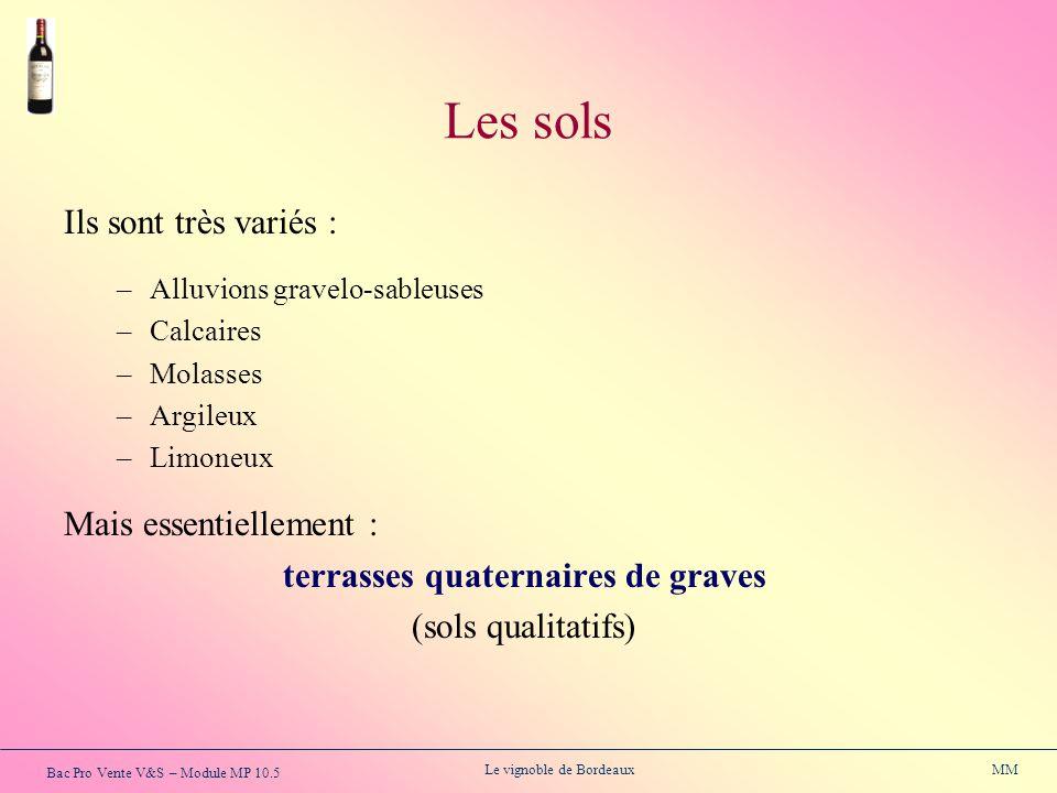 Bac Pro Vente V&S – Module MP 10.5 Le vignoble de Bordeaux MM Les sols Ils sont très variés : –Alluvions gravelo-sableuses –Calcaires –Molasses –Argil