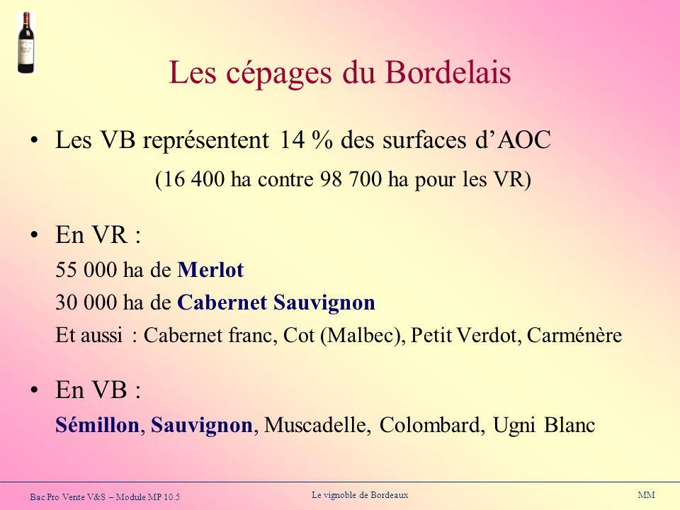 Bac Pro Vente V&S – Module MP 10.5 Le vignoble de Bordeaux MM Les cépages du Bordelais Les VB représentent 14 % des surfaces dAOC (16 400 ha contre 98