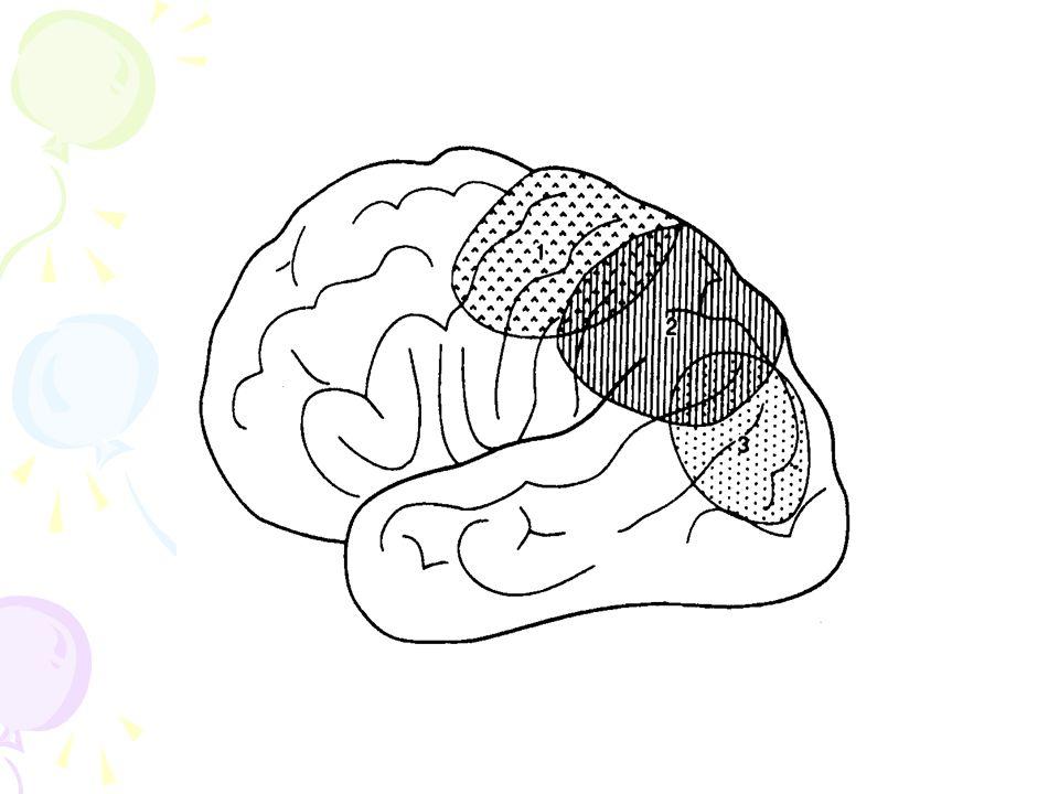Conclusion grande diversité dexpression retrouvé dans de nombreuses situations cliniques isolé ou associé Nécessité dun bilan neuropsychologique Mécanisme cognitif sous-jacent Compétences préservées Nécessité dun repérage et diagnostic précoce Place dans le soin de la psychomotricité et de lergothérapie Le lien avec lécole.
