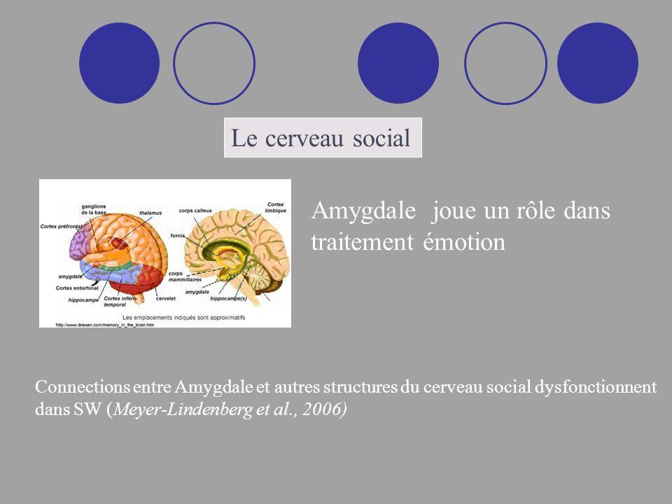 Le cerveau social Amygdale joue un rôle dans traitement émotion Connections entre Amygdale et autres structures du cerveau social dysfonctionnent dans SW (Meyer-Lindenberg et al., 2006)