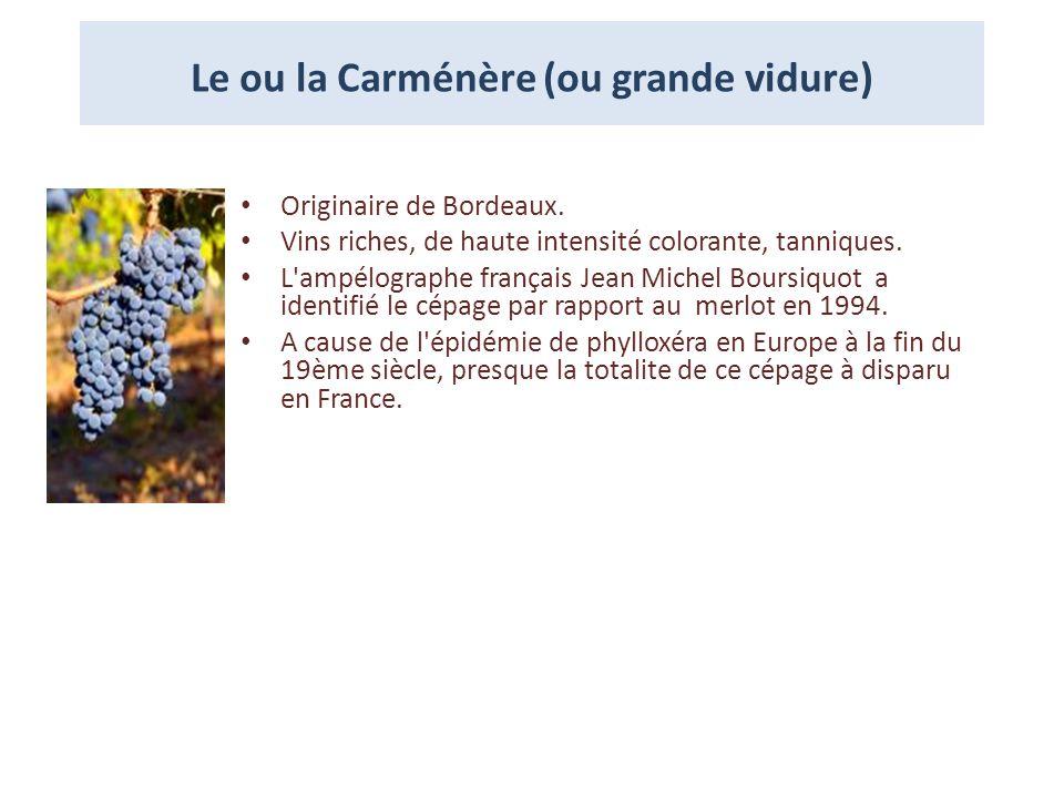 Le ou la Carménère (ou grande vidure) Originaire de Bordeaux. Vins riches, de haute intensité colorante, tanniques. L'ampélographe français Jean Miche