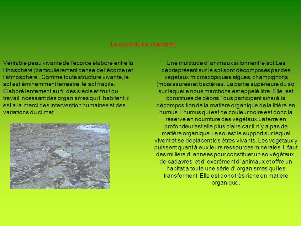 Le cycle du sol (calcaire) Véritable peau vivante de lécorce élabore entre la lithosphère (particulièrement dense de lécorce) et latmosphère. Comme to