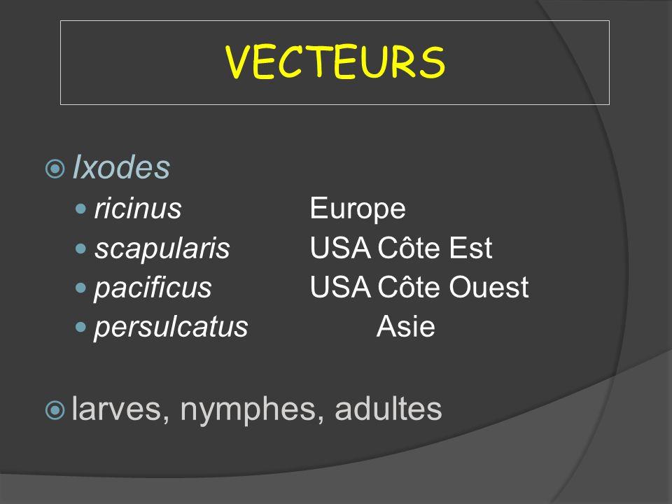 VECTEURS Ixodes ricinusEurope scapularisUSA Côte Est pacificus USA Côte Ouest persulcatusAsie larves, nymphes, adultes