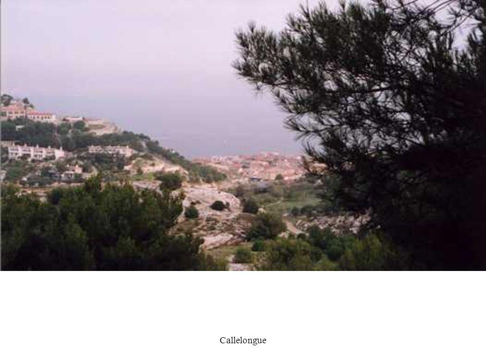 Callelongue