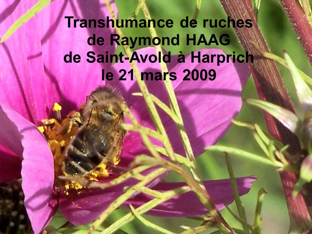 Transhumance de ruches de Raymond HAAG de Saint-Avold à Harprich le 21 mars 2009