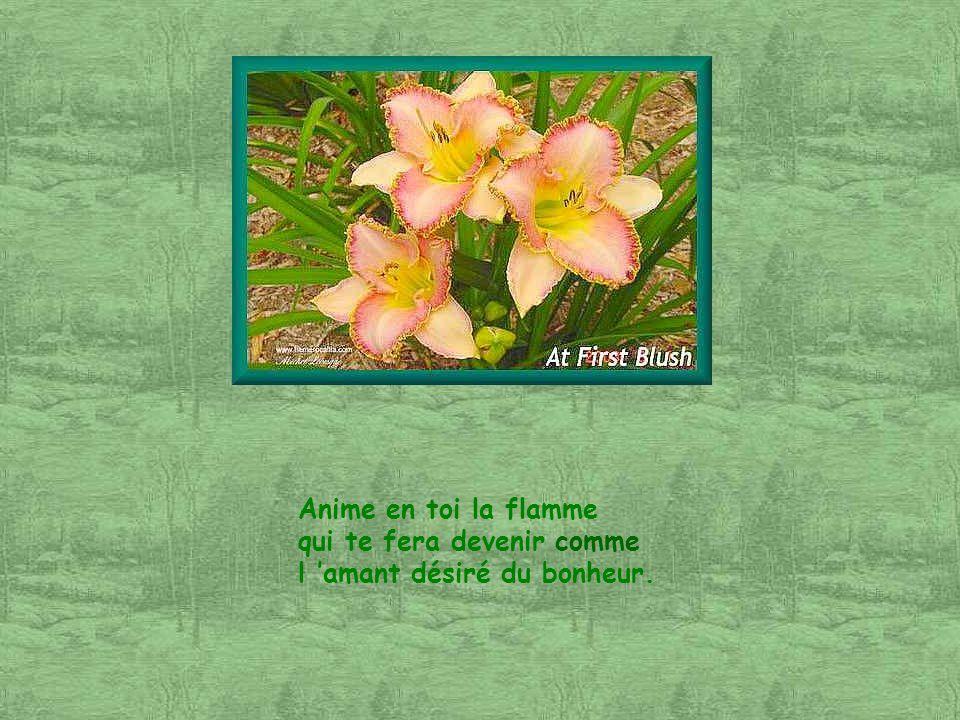 Ces magnifiques photos dhémérocales proviennent du site : Ce site comprend, je crois bien, plus d une centaine de photos de ces fleurs .