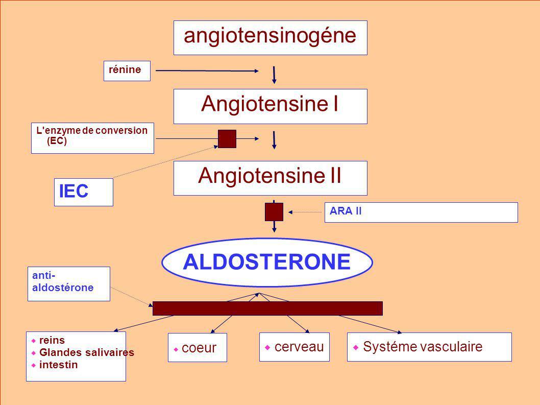 ALDOSTERONE angiotensinogéne rénine Angiotensine I Angiotensine II L enzyme de conversion (EC) anti- aldostérone reins Glandes salivaires intestin coeur cerveau Systéme vasculaire IEC ARA II