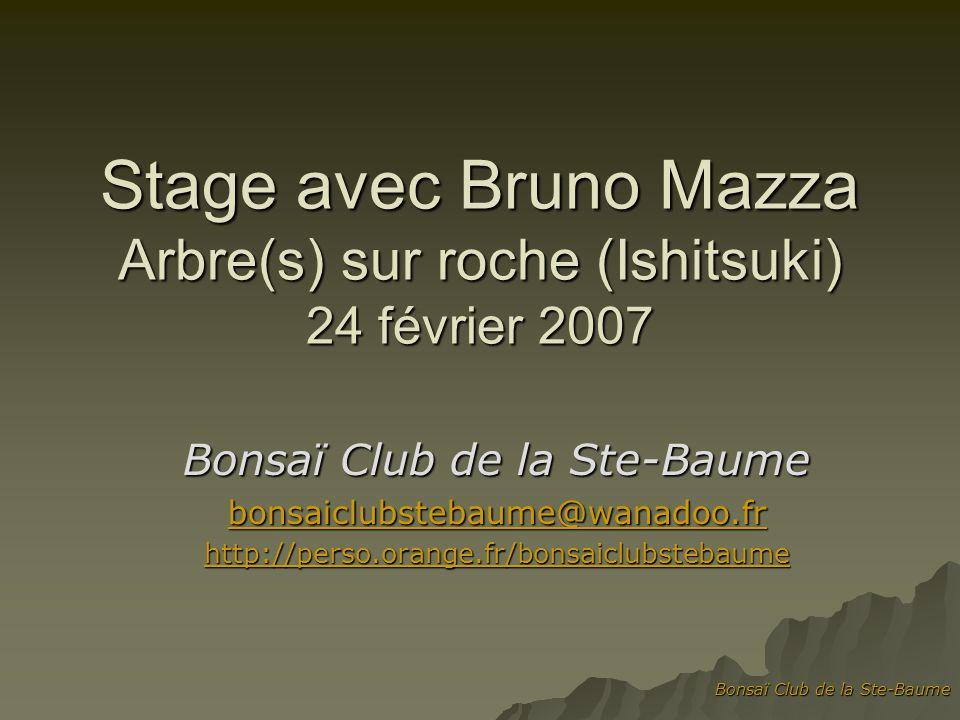 Bonsaï Club de la Ste-Baume Stage avec Bruno Mazza Arbre(s) sur roche (Ishitsuki) 24 février 2007 Bonsaï Club de la Ste-Baume bonsaiclubstebaume@wanadoo.fr http://perso.orange.fr/bonsaiclubstebaume