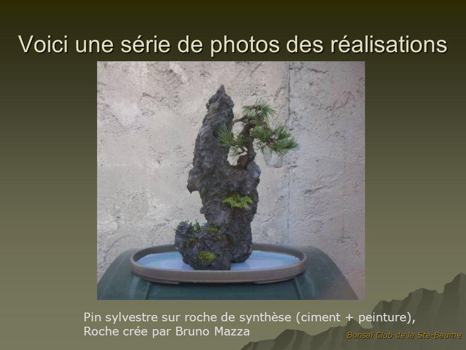 Bonsaï Club de la Ste-Baume Voici une série de photos des réalisations Pin sylvestre sur roche de synthèse (ciment + peinture), Roche crée par Bruno Mazza