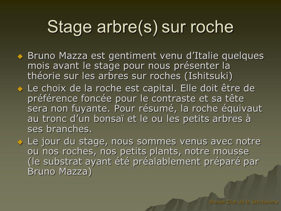 Bonsaï Club de la Ste-Baume Etape 1 : Bruno nous parle du choix de la roche et il choisit sa face, son inclinaison.