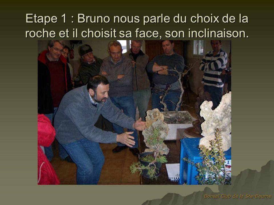 Bonsaï Club de la Ste-Baume Etape 2 : on sélectionne larbre ou les arbres.